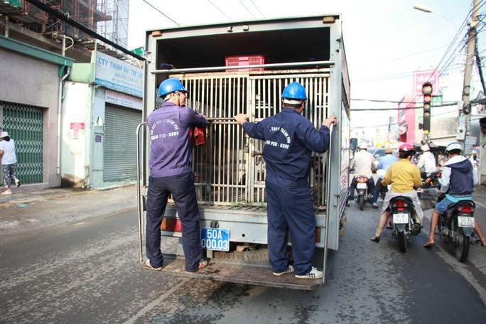 Biệt đội săn chó thả rông ở Sài thành - Ảnh 1.