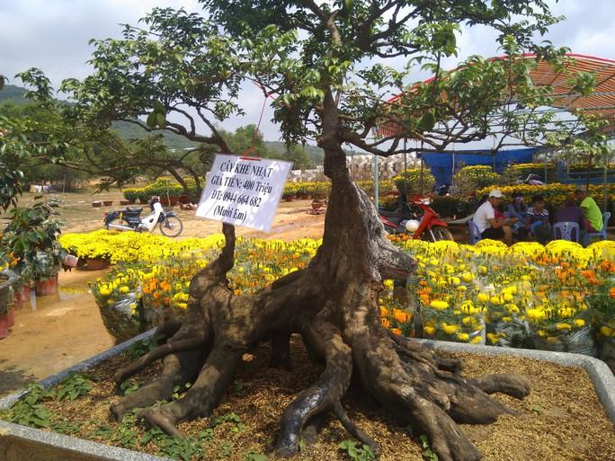 Chiêm ngưỡng cây khế hình chó, dừa 15 ngọn giá nửa tỉ ở Phú Quốc - Ảnh 3.