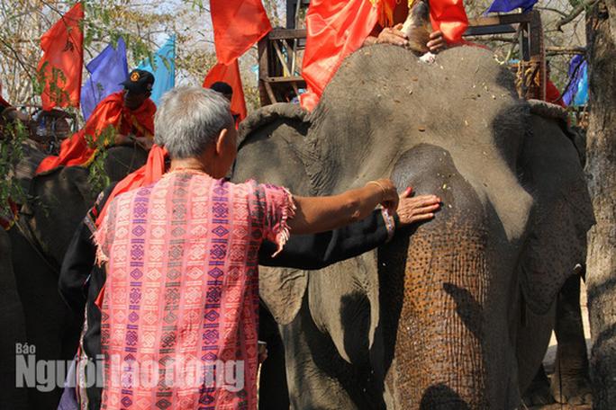 Độc đáo lễ cúng sức khỏe cho voi - Ảnh 4.