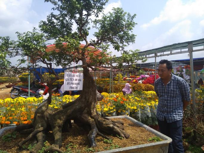 Chiêm ngưỡng cây khế hình chó, dừa 15 ngọn giá nửa tỉ ở Phú Quốc - Ảnh 4.