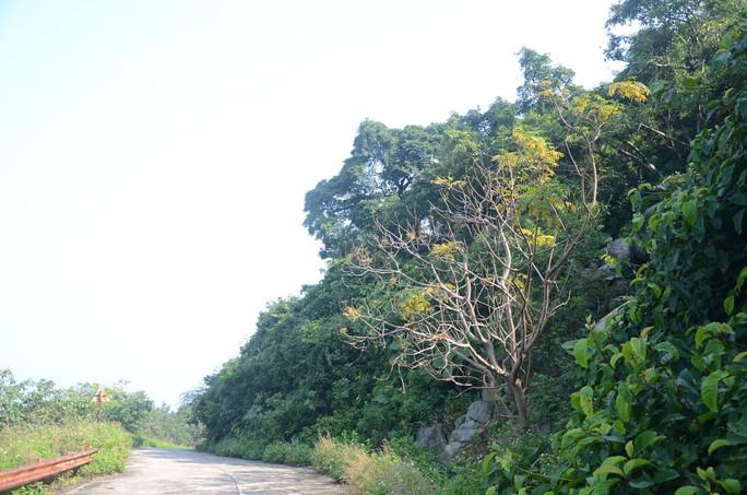Ngắm nữ hoàng linh trưởng trên bán đảo Sơn Trà - Ảnh 1.
