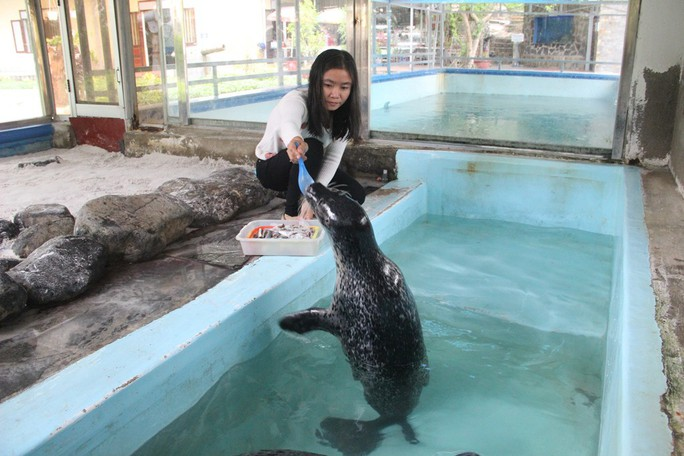 Kỳ công nuôi chó biển ở Nha Trang - Ảnh 4.