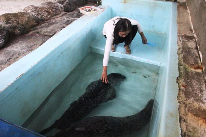 Kỳ công nuôi chó biển ở Nha Trang - Ảnh 2.