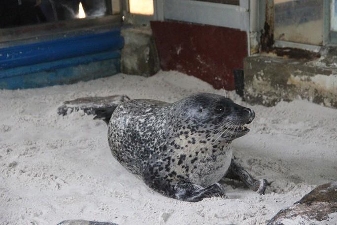 Kỳ công nuôi chó biển ở Nha Trang - Ảnh 6.