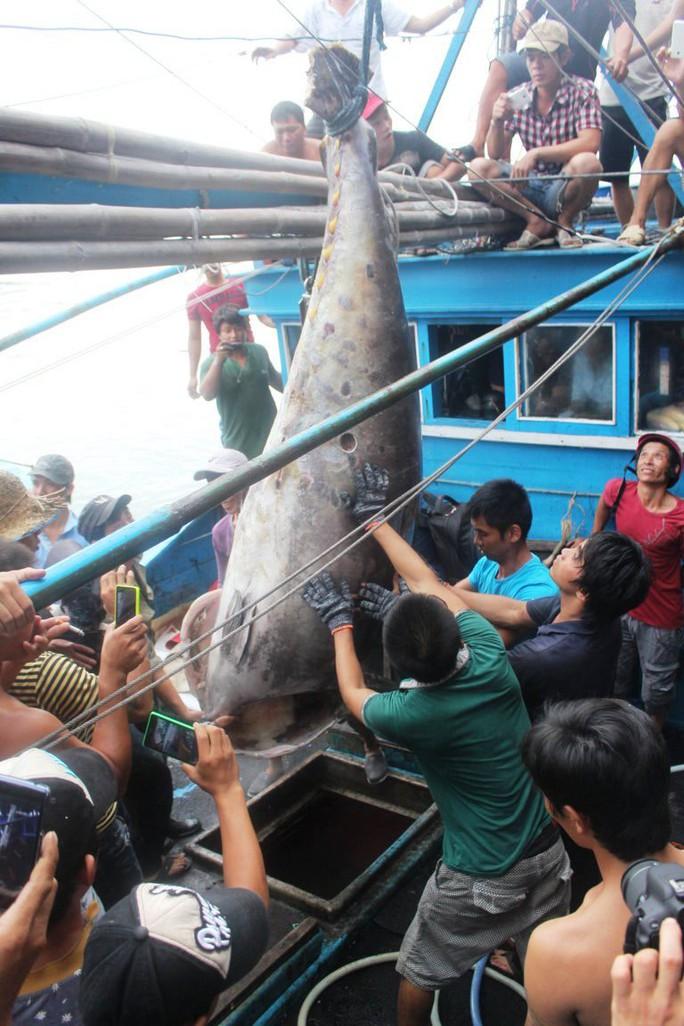 Ra Hoàng Sa câu cá ngừ vây xanh kỷ lục  - Ảnh 2.