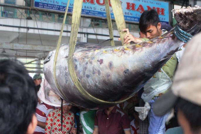 Ra Hoàng Sa câu cá ngừ vây xanh kỷ lục  - Ảnh 1.