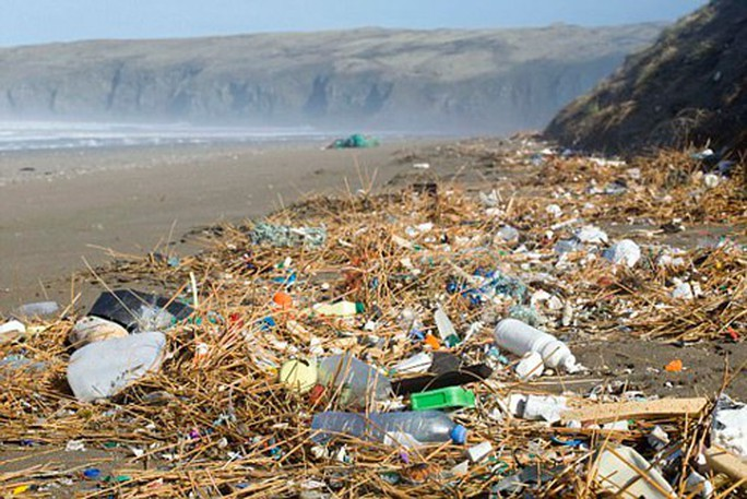 Tràn lan cá biển nhiễm nhựa độc - Ảnh 1.