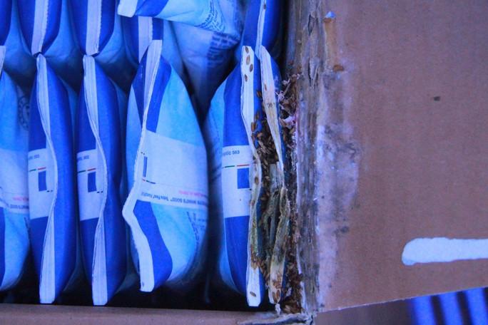 TH True Milk trần tình vụ có dòi trong thùng sữa - Ảnh 1.