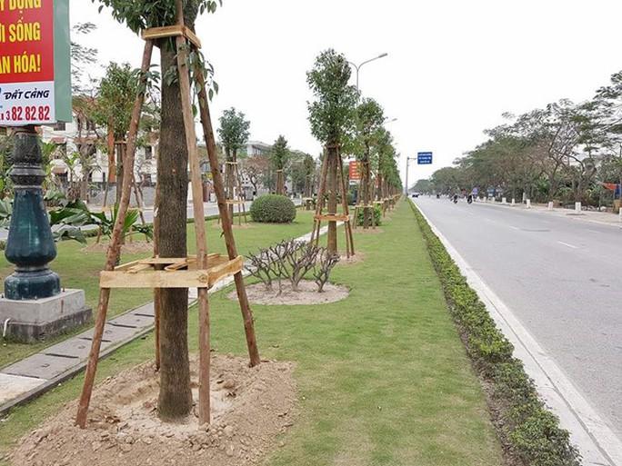 Nhập 12 tỉ đồng cây long não Trung Quốc trồng trên đường hoa phượng dài nhất nước - Ảnh 1.