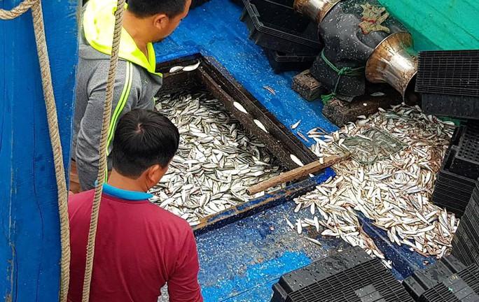 Ngư dân phấn kích trúng đậm lộc biển 4-5 tấn cá mỗi tàu - Ảnh 1.