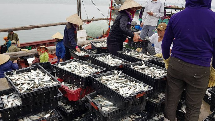 Ngư dân phấn kích trúng đậm lộc biển 4-5 tấn cá mỗi tàu - Ảnh 4.