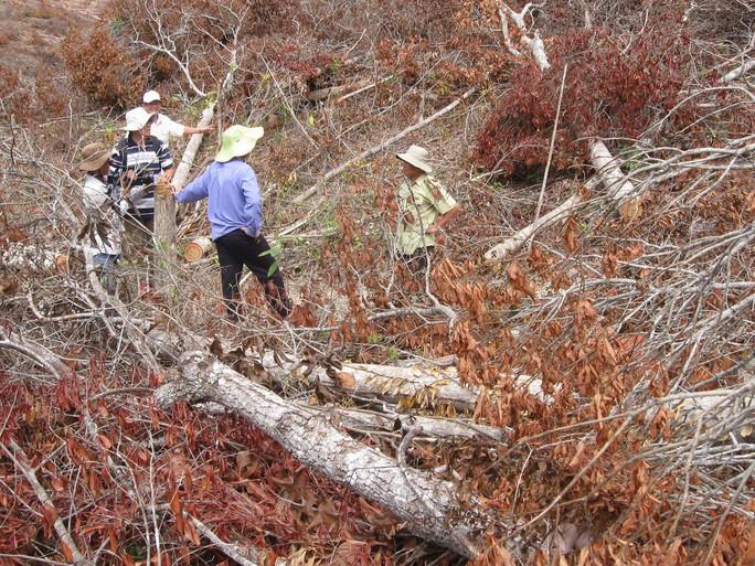 Cảnh cáo trưởng công an huyện dính líu phá rừng - Ảnh 1.