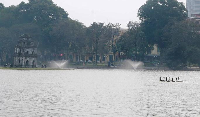 Trầm trồ nhìn đàn thiên nga xuất hiện giữa Hồ Gươm - Ảnh 3.