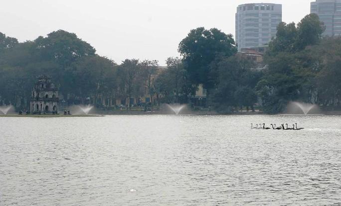 Trầm trồ nhìn đàn thiên nga xuất hiện giữa Hồ Gươm - Ảnh 11.