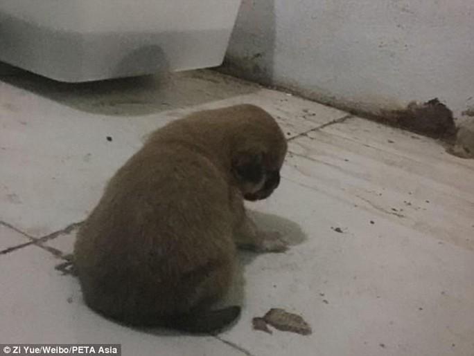 Sở thú Trung Quốc bị lên án vì cho trăn ăn chó con - Ảnh 2.