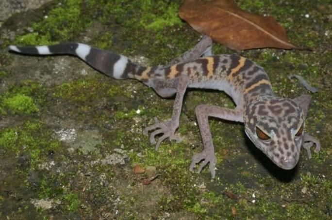 Mekong - Thánh địa của những sinh vật chưa từng thấy trên trái đất - Ảnh 7.
