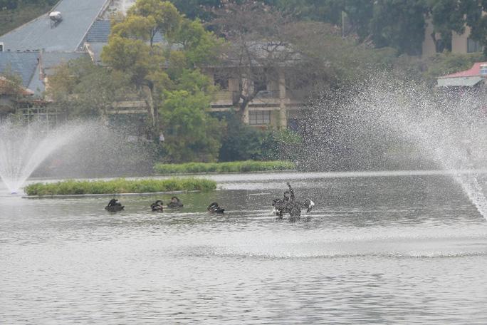 GS Lê Văn Lan: Thả thiên nga ở Hồ Gươm là rất thuận, hợp lí - Ảnh 6.