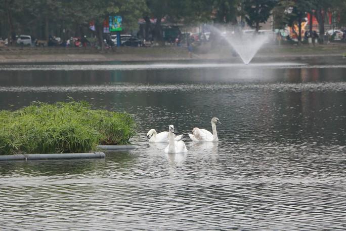 GS Lê Văn Lan: Thả thiên nga ở Hồ Gươm là rất thuận, hợp lí - Ảnh 7.