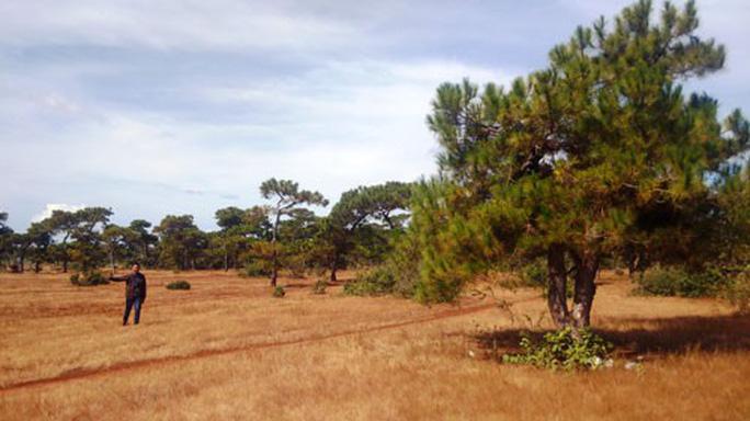 Lo mất rừng bởi dự án sân golf - Ảnh 1.
