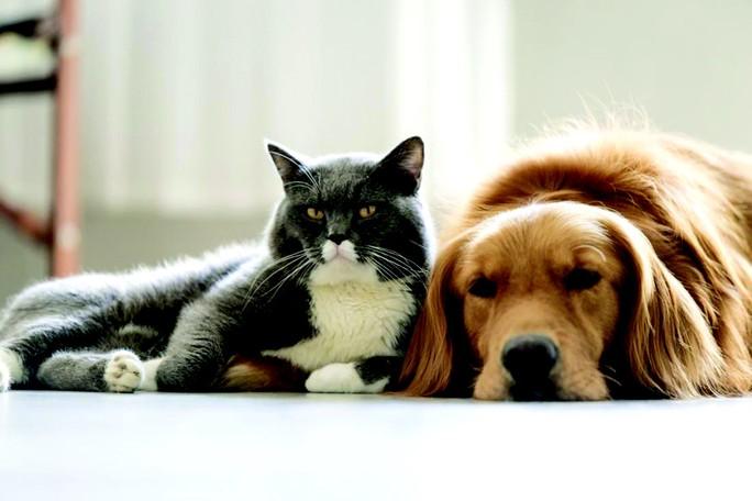 (Báo Xuân M4Tết 19.2) Mèo đến thì khó, chó đến thì giàu - Ảnh 1.
