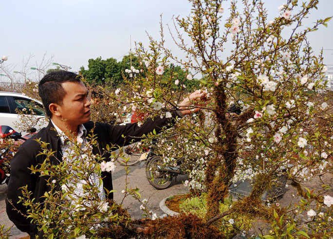 Mai trắng quý gây sốc với giá trăm triệu tại chợ hoa Tết đất cố đô - Ảnh 4.