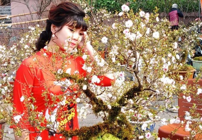Mai trắng quý gây sốc với giá trăm triệu tại chợ hoa Tết đất cố đô - Ảnh 14.