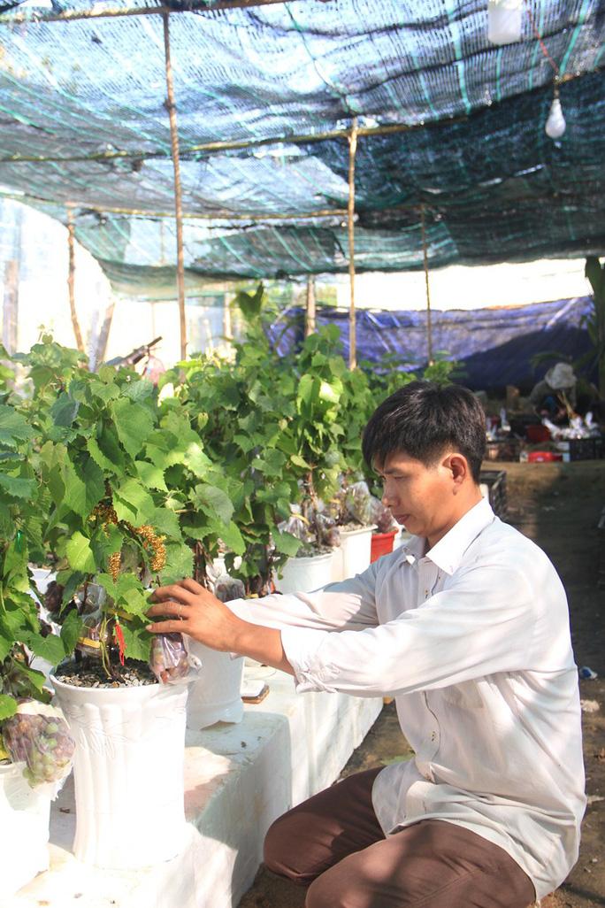 Độc đáo nho kiểng Ninh Thuận bội thu dịp Tết - Ảnh 6.