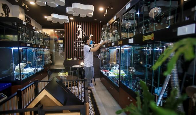 Choáng ngôi nhà 5 sao của thú cưng Sài Gòn - Ảnh 6.