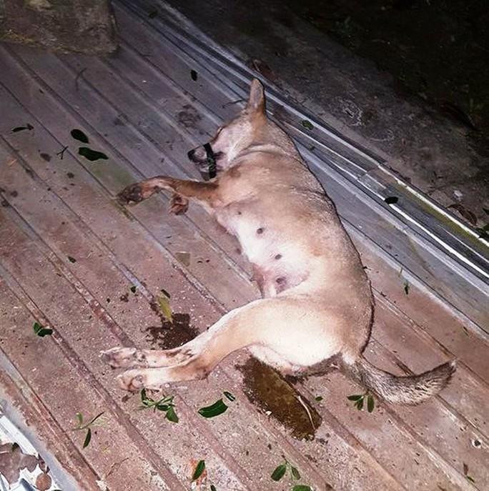 Trộm xong  4 con chó, 2 tên trộm gặp tai nạn bất tỉnh - Ảnh 3.