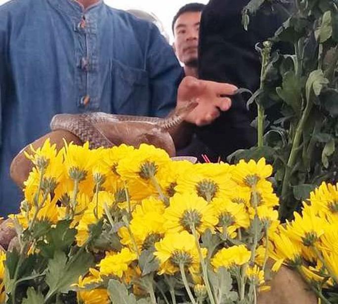 Dân ùn ùn xem mẹ con rắn thần xuất hiện trên mộ vô danh - Ảnh 4.