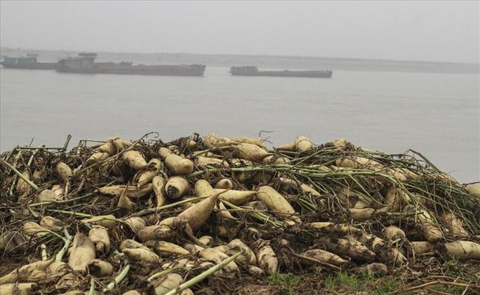 Cả cánh đồng ngập trắng củ cải bị vứt bỏ vì không ai mua - Ảnh 12.