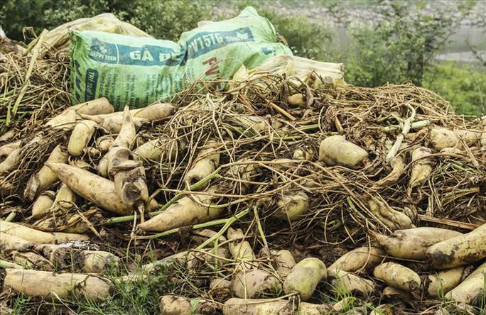 Cả cánh đồng ngập trắng củ cải bị vứt bỏ vì không ai mua - Ảnh 3.