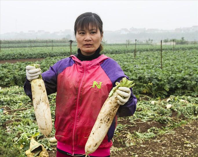 Cả cánh đồng ngập trắng củ cải bị vứt bỏ vì không ai mua - Ảnh 9.