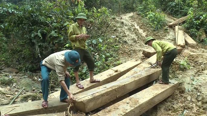 Phát hiện vụ xẻ thịt rừng phòng hộ lớn nhất tỉnh Quảng Bình - Ảnh 5.