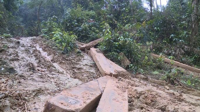 Phát hiện vụ xẻ thịt rừng phòng hộ lớn nhất tỉnh Quảng Bình - Ảnh 6.