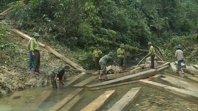 Phát hiện vụ xẻ thịt rừng phòng hộ lớn nhất tỉnh Quảng Bình - Ảnh 9.