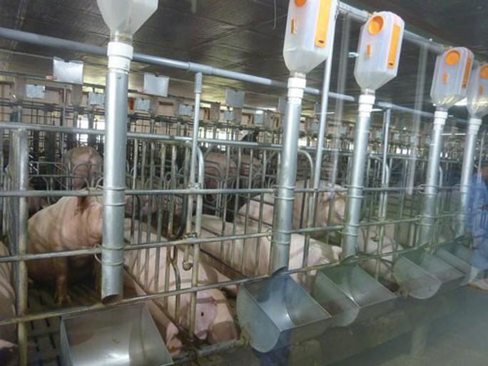 Chăn nuôi vẫn khó tứ bề (*): Giảm giá thành - vấn đề sống còn - Ảnh 1.