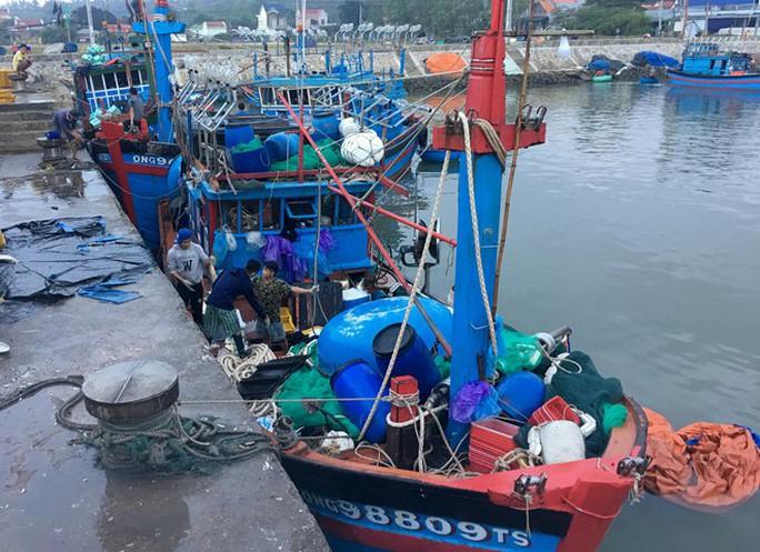 Một tàu cá ở Quảng Ngãi gặp đàn cá khủng khi vừa ra cửa biển - Ảnh 2.