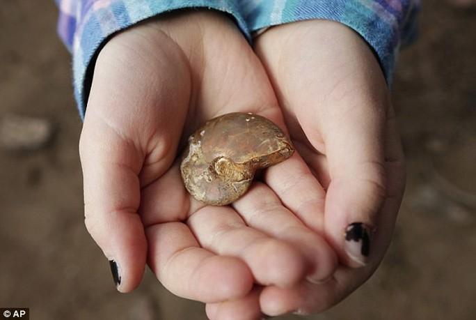 Bé 7 tuổi khai quật được hóa thạch 65 triệu năm - Ảnh 1.