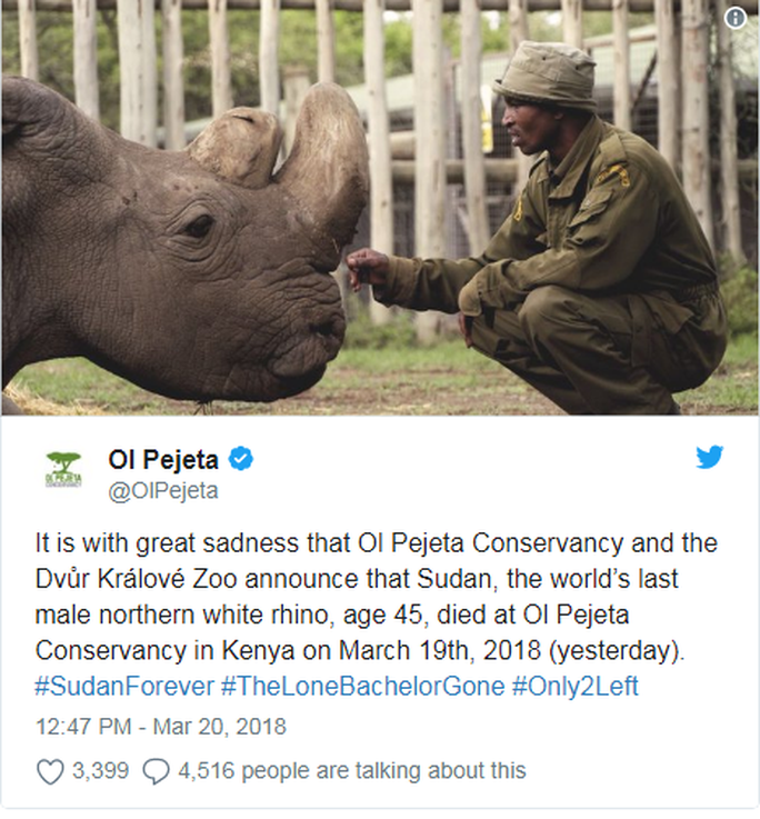 Con tê giác trắng phương Bắc đực cuối cùng được trợ tử - Ảnh 2.