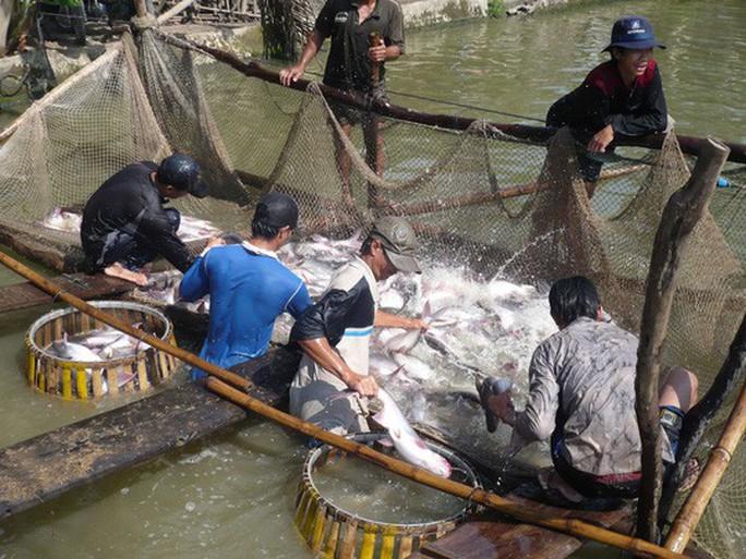 Cẩn trọng khi xuất khẩu thủy sản qua Trung Quốc - Ảnh 1.