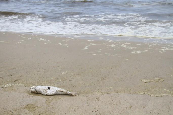 Hơn 3 km biển Đà Nẵng đổi màu sẫm và bốc mùi hôi - Ảnh 7.