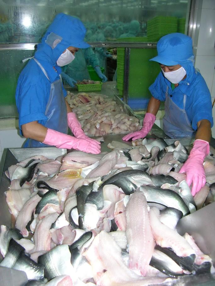 Gần 600 tỉ đồng đầu tư sản xuất cá tra giống chất lượng cao cho ĐBSCL - Ảnh 1.