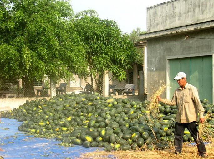 Trung Quốc mua mạnh, dưa hấu Bình Định tăng giá gấp đôi - Ảnh 1.