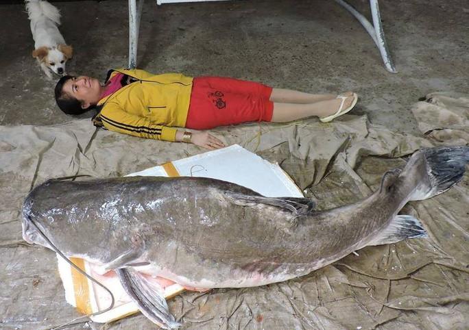 Mua được cá lăng khủng nặng hơn 85kg - Ảnh 1.