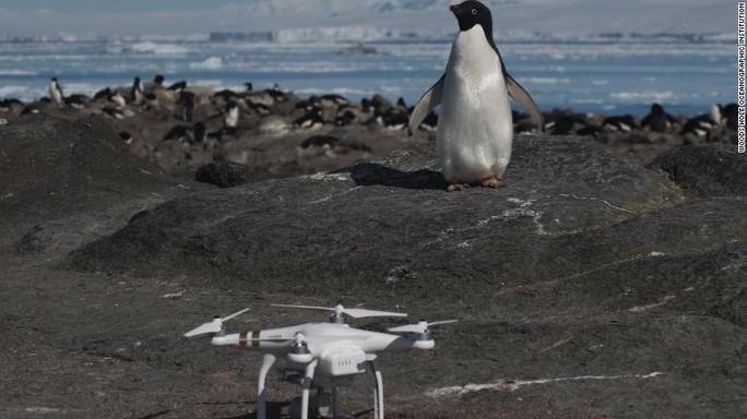 Bầy chim cánh cụt khổng lồ trên quần đảo Nguy Hiểm - Ảnh 3.