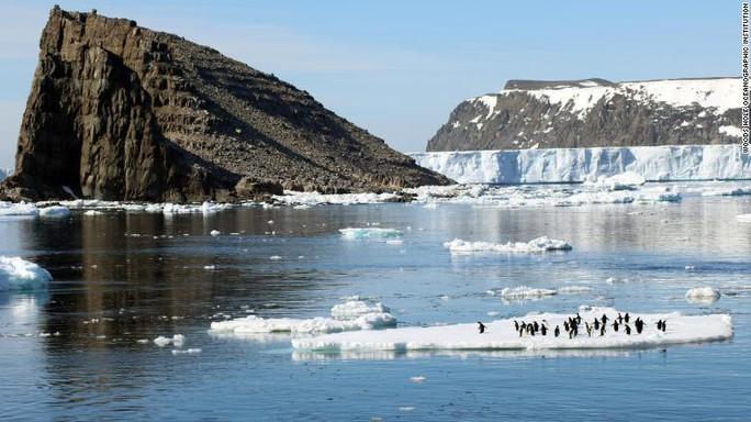 Bầy chim cánh cụt khổng lồ trên quần đảo Nguy Hiểm - Ảnh 2.