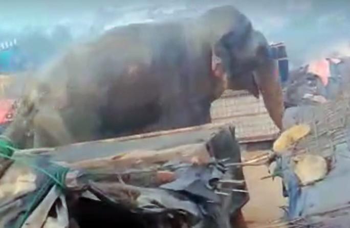 Đi kiếm thức ăn, voi giết chết 10 người tị nạn Rohingya - Ảnh 1.