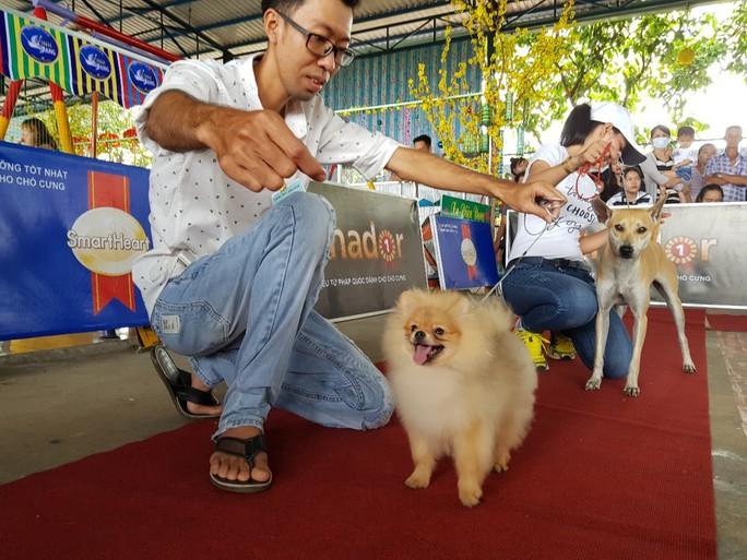 Ngắm dàn chó đắt tiền từ khắp nơi về miền Tây thi chó đẹp - Ảnh 7.
