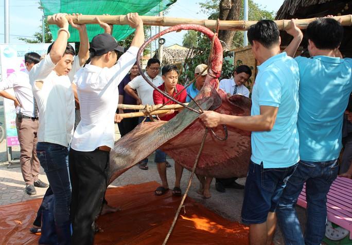 """Bắt được """"quái ngư nước ngọt"""" hơn 220 kg, cả chục người gánh mới nổi - Ảnh 2."""